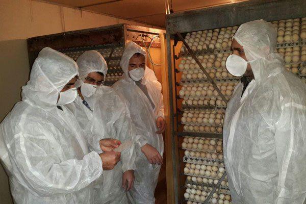 پرندگان بوئین زهرا واکسینه شدند