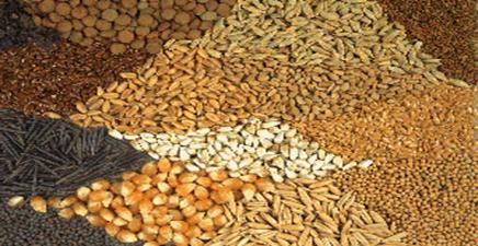 نظارت دامپزشکی بوئین زهرا بر روند تولید و عرضه خوراک دام و طیور