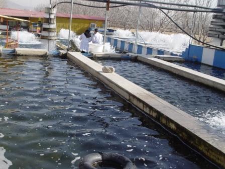 نظارت مستمر دامپزشکی بوئین زهرا بر تولید بهداشتی مزارع پرورش ماهی
