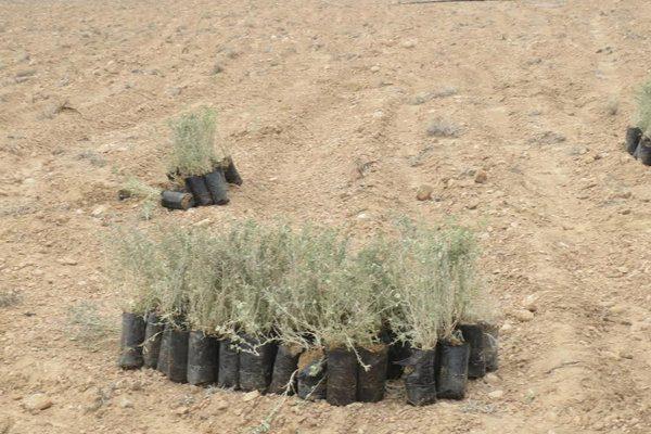۷ میلیارد تومان در طرح بیابان زدایی قزوین هزینه می شود