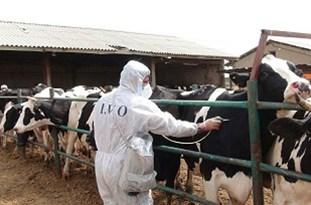 دامپزشکی بوئینزهرا بر نحوه توزیع سموم در واحدهای روستایی نظارت میکند