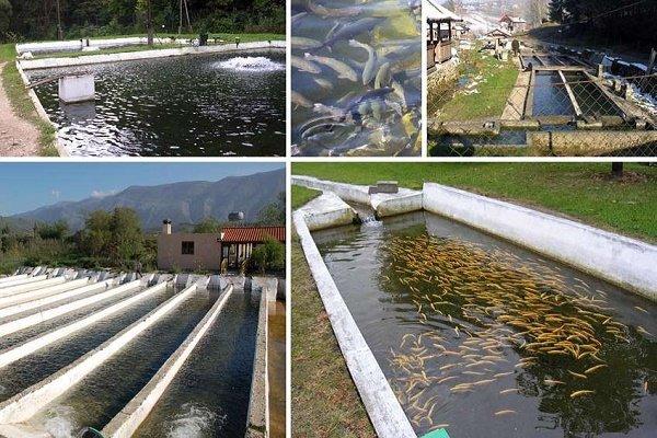 ۲ میلیون قطعه بچه ماهی قزل آلا در استخرهای قزوین رهاسازی شد