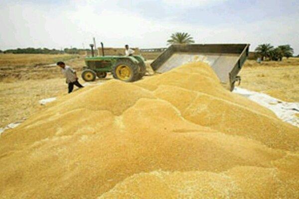 مطالبات گندم کاران استان قزوین تا هفته آینده پرداخت می شود
