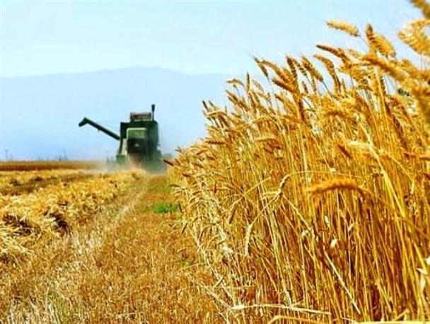 جمعآوری زکات گندم و جو همزمان با فصل برداشت در بوئین زهرا