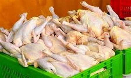 کنترل کمبود مرغ با جلوگیری از کشتار غیرمجاز/ تولید استان قزوین خوراک سیاهچاله تهران میشود